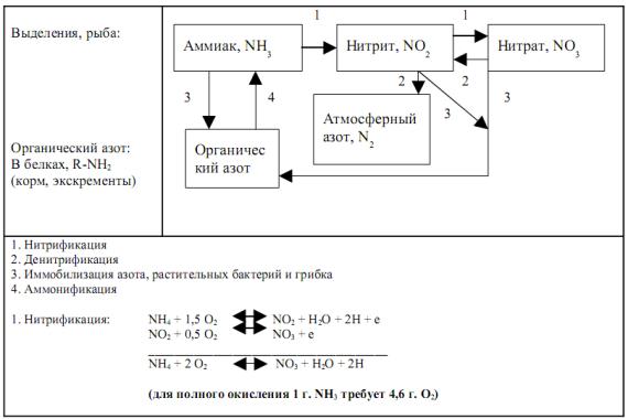 Схема 1. Круговорот азота.