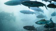 """Как компания """"KSK Aqua"""" оптимизирует биологические фильтры для очистки воды"""