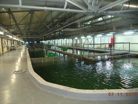 В Белоруссии готово к сдаче в эксплуатацию рыбоводное хозяйство по производству 300 тонн товарной форели в год