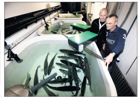 В Дании начато строительство хозяйства по выращиванию судака