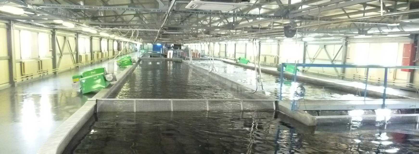 Рыбоводное хозяйство с УЗВ мощностью 300 тонн товарной форели в год