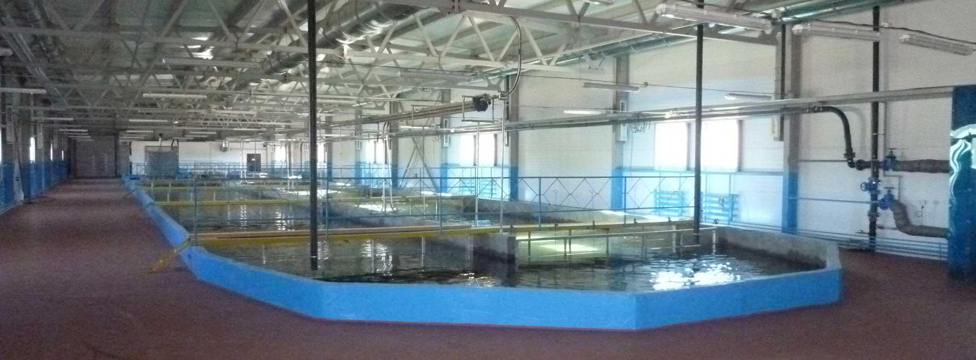 Рыбоводное хозяйство с УЗВ мощностью 75 тонн товарной форели в год