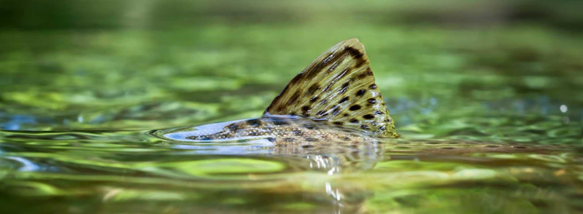 """Безупречное качество рыбных кормов """"Aller Aqua"""""""